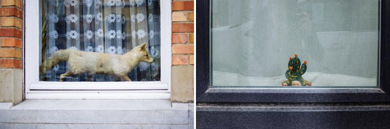 چیزهای عجیب پشت پنجره بلژکیها