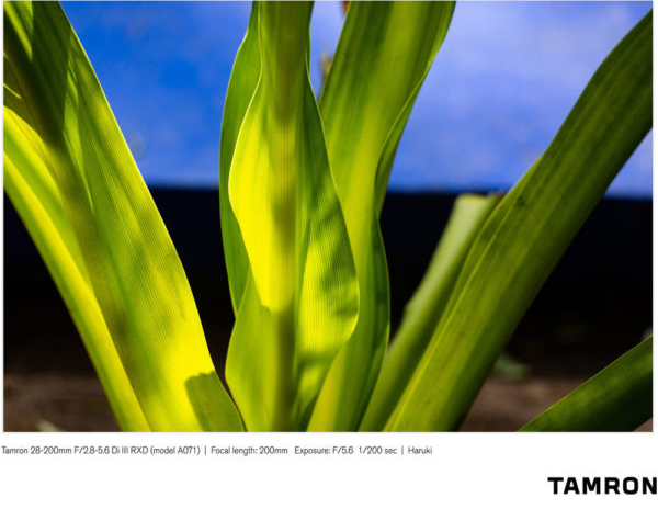 معرفی لنز  Tamron 28-200mm f/2.8-5.6 Di III RXD