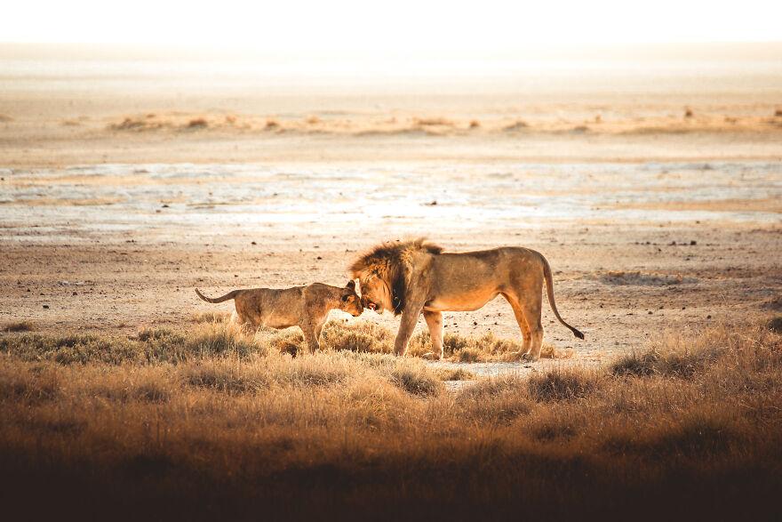 نامیبیا – عشق خانوادگی