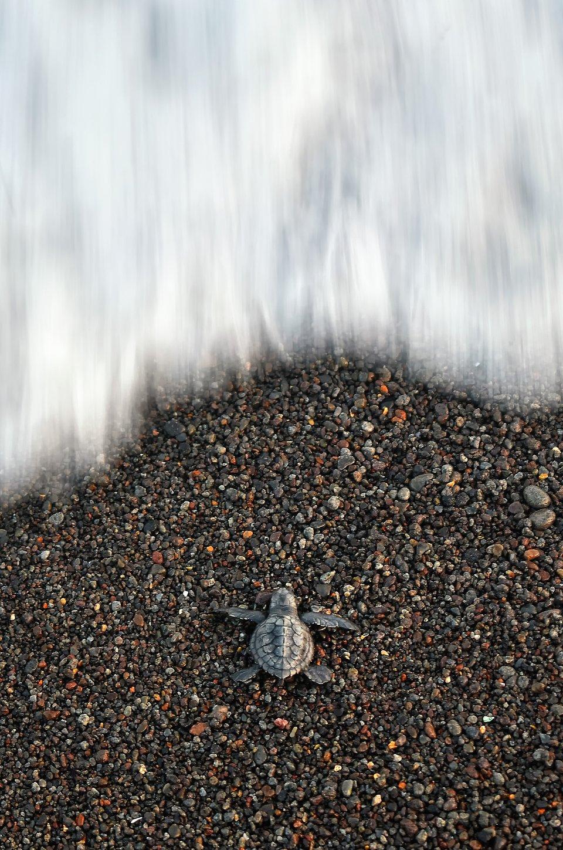 آثار برگزیده مسابقه عکاسی از سوژههای کوچک