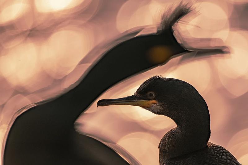 عکاسی پرندگان